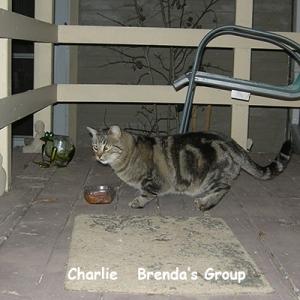 BG-charlie
