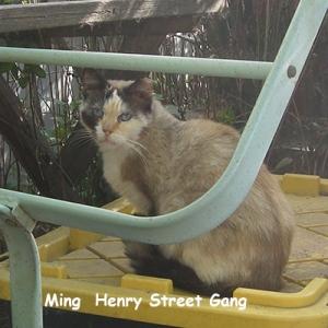 O-HS-Ming