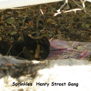 O-HS-Sprinkles