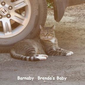 SU-Barnaby