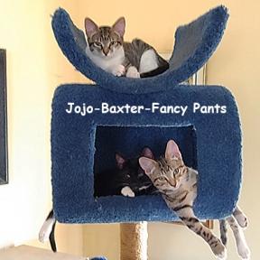 SU-Baxter-JoJo-Fancy