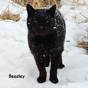 SU-Beasly