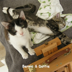 Two of Brenda's favorite fosters. Bernie had almost every parasite & fungus known. Dottie was 3 weeks. After 4 long months to get them healthy, they were adopted together.