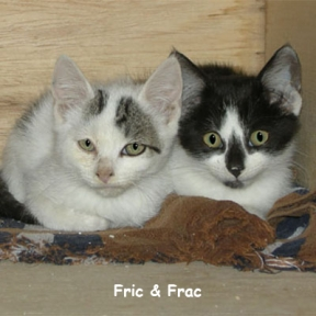 Brenda's first experience with socializing feral kittens. Yikes! These two were pretty wild and completely terrified. Well at least Frac was. They were adopted out together by RMFR.