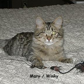 SU-Mary-winkie