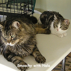Nala was trapped in Brenda's shed. She was 6 months and feral. Smoochy has helped socialize many feral kitties, well mostly girl kitties.