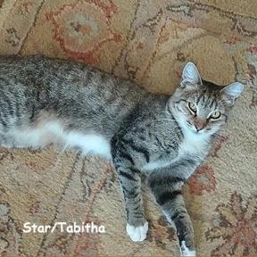 SU-Star