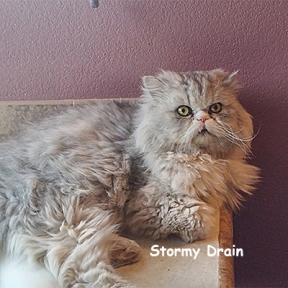 SU-Stormy