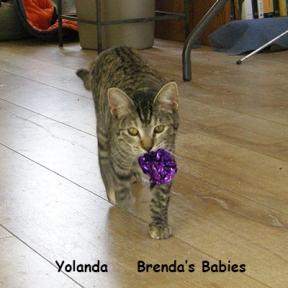 SU Yolanda