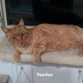 SU-peaches