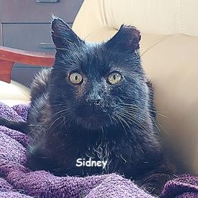 SU-sidney