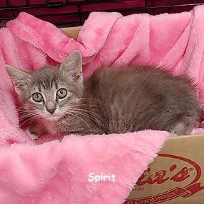 SU-spirit